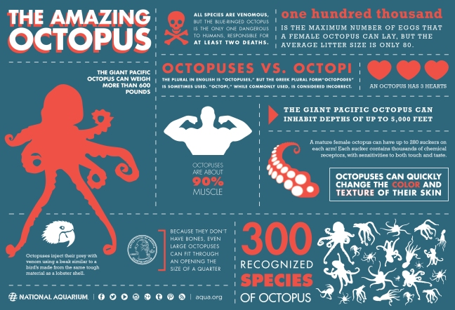 octopus_infographic